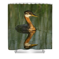 Shower Curtain featuring the photograph Red-necked Grebe by James Peterson