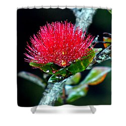 Red Ohia Lehua In Hawaii Volcano Mist Shower Curtain