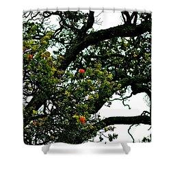 Red Ohia Lehua Tree Shower Curtain