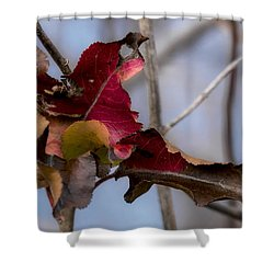 Red Over Branch Shower Curtain