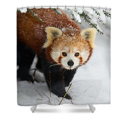 Red Panda In The Snow Shower Curtain