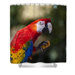 Red Parrot  Shower Curtain by Garry Gay