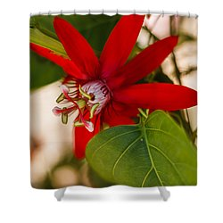 Shower Curtain featuring the photograph Red Passion Flower by Jane Luxton