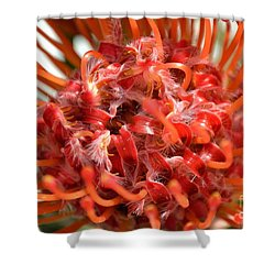 Red Pincushion Close Up Shower Curtain