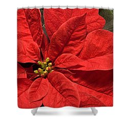 Red Poinsettia Plant For Christmas Shower Curtain by Jane McIlroy