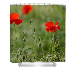 Red Poppies 2 Shower Curtain by Carol Lynch