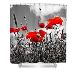 Red Poppies On Black And White Background Shower Curtain by Dany Lison
