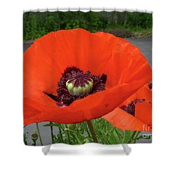 Shower Curtain featuring the photograph Red Poppy by Barbara Griffin