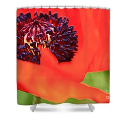 Red Poppy Shower Curtain by Linda Bianic