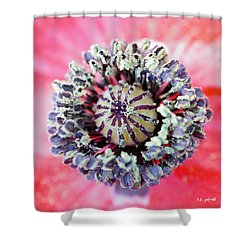 Shower Curtain featuring the photograph Red Poppy Squared by TK Goforth