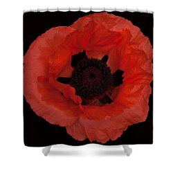 Red Poppy Shower Curtain by Susan Rovira