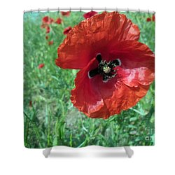 Shower Curtain featuring the photograph Red Poppy by Vesna Martinjak