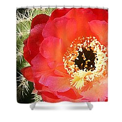 Red Prickly Pear Blossom Shower Curtain by Ellen Henneke