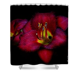 Red Red Lily Shower Curtain