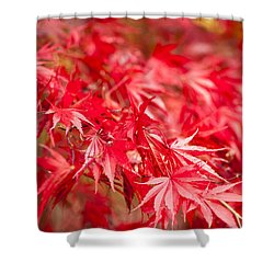Red Red Red Shower Curtain by Anne Gilbert