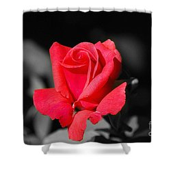 Red Red Rose - Sc Shower Curtain