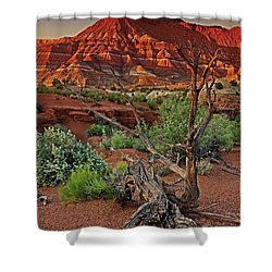 Shower Curtain featuring the photograph Red Rock Butte And Juniper Snag Paria Canyon Utah by Dave Welling