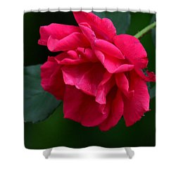 Red Rose 2013 Shower Curtain by Maria Urso