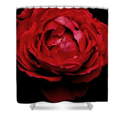 Shower Curtain featuring the photograph Red Rose by Charlotte Schafer