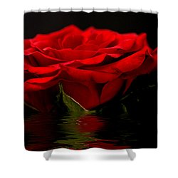 Red Rose Flood Shower Curtain by Steve Purnell