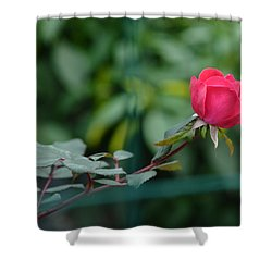 Shower Curtain featuring the photograph Red Rose I by Lisa Phillips