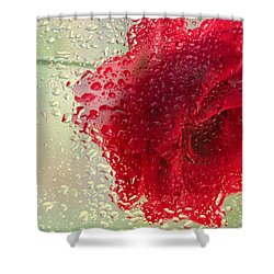 Red Rose In The Rain Shower Curtain by Don Schwartz