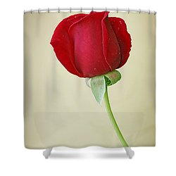 Red Rose On White Shower Curtain by Sandy Keeton
