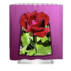Red Rose Shower Curtain by Thomas Woolworth