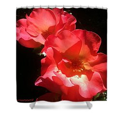 Red Roses - My Second Entry For Shower Curtain
