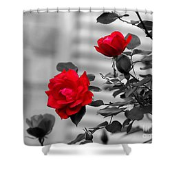 Red Roses Shower Curtain by Jai Johnson