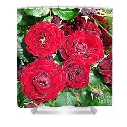Shower Curtain featuring the photograph Red Roses by Vesna Martinjak