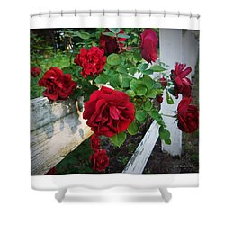 Red Roses - White Fence Shower Curtain by Brian Wallace