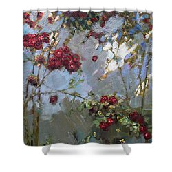 Red Roses Shower Curtain by Ylli Haruni