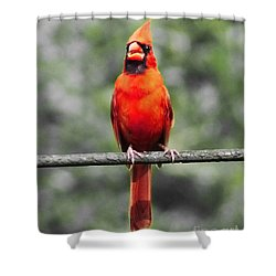 Shower Curtain featuring the photograph Red Royalty by Lizi Beard-Ward