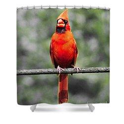 Red Royalty Shower Curtain by Lizi Beard-Ward