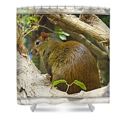 Red-rumped Agouti Shower Curtain