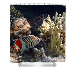 Red Sea Beauty 2 Shower Curtain