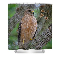 Red Shoulder Series 1 Shower Curtain