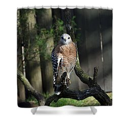 Red Shouldered-hawk Shower Curtain by Robert Meanor