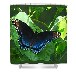 Red-spotted Admiral Butterfly Shower Curtain by William Tanneberger