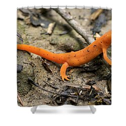 Red-spotted Newt Shower Curtain