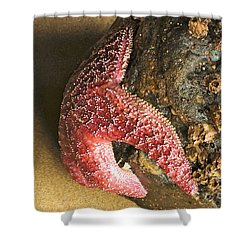Red Star Shower Curtain