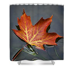 Red Sugar Maple Leaf Shower Curtain by Christina Rollo
