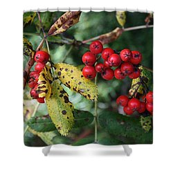 Red Summer Berries - Whistler Shower Curtain by Amanda Holmes Tzafrir