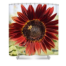 Red Sunflower And Bee Shower Curtain