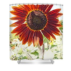 Red Sunflower Glow Shower Curtain by Kerri Mortenson