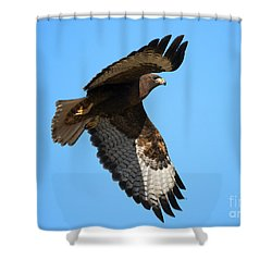 Red-tail Flight Shower Curtain