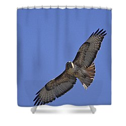 Red-tail Hawk  #1853 Shower Curtain by J L Woody Wooden