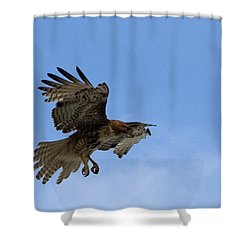 Red Tail Hawk Shower Curtain by Bill Gallagher