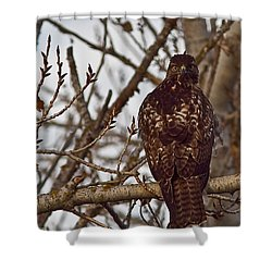 Shower Curtain featuring the photograph Red Tail Hawk by Brian Williamson